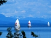 asailing-campbell-river-style-dogs-170-001